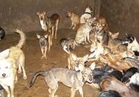 Phạt gần 5 triệu đồng vì chở chó không kiểm dịch