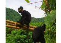Đề xuất thành lập khu bảo tồn Voọc gáy trắng tại xã Thạch Hóa