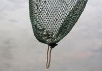 Cá bị vớt lại ngay khi vừa phóng sinh