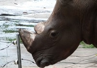 Cam kết không dùng sừng tê giác để chữa bệnh