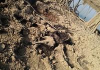 Phát hiện xác voi con đang phân hủy bên đầm lầy