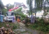 Nhiều cổ thụ ở Đà Lạt gãy đổ, 3 người bị thương