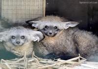 Sắp mở cửa vườn thú lớn nhất Việt Nam