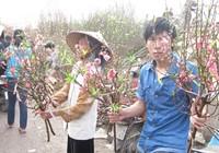 Hà Nội: Đào, hoa đều giảm giá