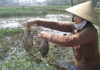 Quảng Ngãi: Nhà máy xả thải, cá chết hàng loạt