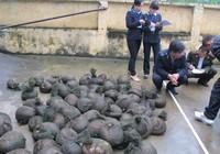 Điều tra vụ chở 500 kg tê tê từ Lào