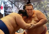 Lễ hội mùa xuân của các chàng sumo