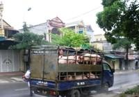 """CSGT bắt """"lò"""" mổ lợn trên xe tải"""