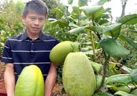 Trái chanh nặng 3,5 kg