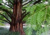 Nga lần đầu tiên giải mã ADN của thân cây cổ đại