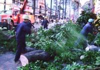 Rớt nhánh cây gây kẹt đường
