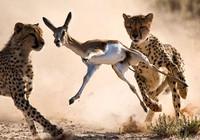 Hình ảnh đẹp nhất về thế giới hoang dã 2010