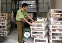 Cơ bản kiểm soát tình trạng nhập lậu gà thải loại