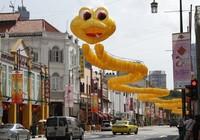 Tết con rắn náo nức trên khắp thế giới
