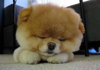 Chú chó hút gần 2 triệu người hâm mộ