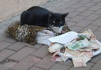 Những chuyện lý thú về mèo