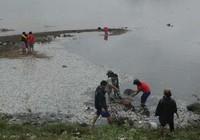 Hãi hùng cá chết trắng mặt hồ