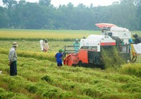 Bán ruộng đi làm thuê có lợi hơn