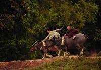 Khát vọng Thăng Long: Thỏa cơn khát phim lịch sử