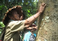 Người Cor giữ rừng