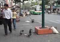 """Rộ """"mốt"""" nuôi gà trên đường phố"""