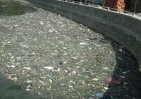 Bình Định: Hồ Bàu Sen bốc mùi hôi nồng nặc