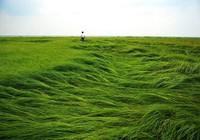 """Hạn hán nghiêm trọng, hồ lớn nhất Trung Quốc thành """"thảo nguyên"""""""
