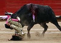 Đấu sĩ trẻ nhất thế giới bị bò húc
