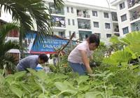 Nếp mới ở chung cư: Hợp tác cộng sinh