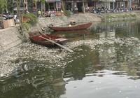 Cá chết trắng mặt hồ Trúc Bạch