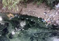 Chuyển cơ quan điều tra khởi tố 76 vụ gây ô nhiễm