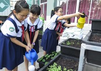 Thêm một trường học làm vườn rau sạch cho học sinh
