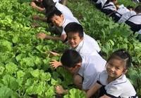 Độc đáo phiên chợ rau sạch của học sinh lớp 1