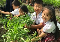 TPHCM: 9 trường học nào theo mô hình tiên tiến?