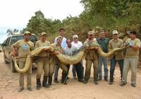 Guiness về rắn