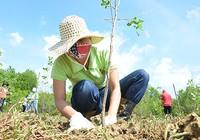 Trồng hơn 10.000 cây mới tại rừng phòng hộ Cần Giờ