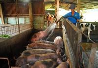 """Đưa tiến bộ công nghệ vào nông nghiệp để """"đọ sức"""" TPP"""