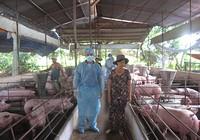 Sẽ đóng cửa cơ sở chăn nuôi dùng chất cấm