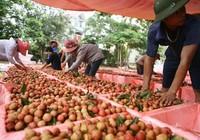 Xuất khẩu giảm khiến nông dân lao đao
