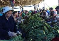 Nhộn nhịp xóm thuốc lào Sài Gòn