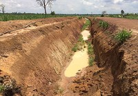 Đào hào ngăn voi rừng, doanh nghiệp bị phạt 50 triệu đồng