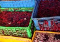 Bắt hàng tấn nội tạng thối sắp đổ xuống sông Đồng Nai