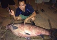 Bắt được cá trắm khủng ở hồ Núi Cốc