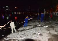 Hà Nội vớt nhiều tấn cá chết trong đêm