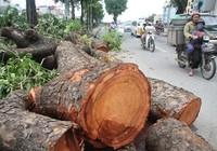 Người Hà Nội vẫn chưa hết bàng hoàng sau cơn bão