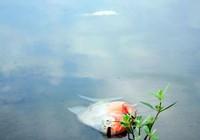 Cá lại chết nhiều ở hồ Linh Đàm