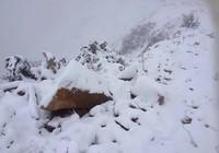 Tuyết phủ trắng ở Nghệ An như... châu Âu