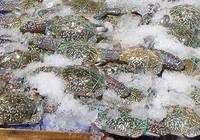 Kinh nghiệm chọn hải sản tươi, ngon