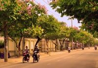 Ngơ ngẩn với sắc tím trên con đường 'lãng mạn nhất Biên Hòa'