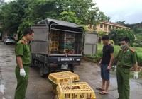Chở gà thải Trung Quốc về Việt Nam thù lao 1 triệu đồng